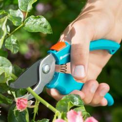 Burak ćwikłowy - cylindryczny Cylindra w typie Opolskiego